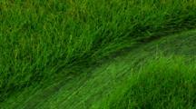 Yellowstone's Winter Creek Flows Over Lush Green Vegetation