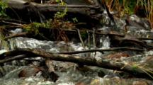 Water Tumbles Over Branch-Strewn Stream In Grand Teton National Park