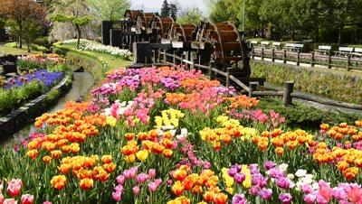 Tonami Tulip Fair landscape with water wheels