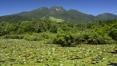 Imoriike Lake with aquatic plants,lily pond and Mt. Myoko