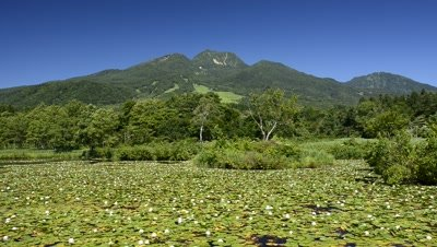 Imoriike Lake with aquatic plants,lily pond flowers and Mt. Myoko