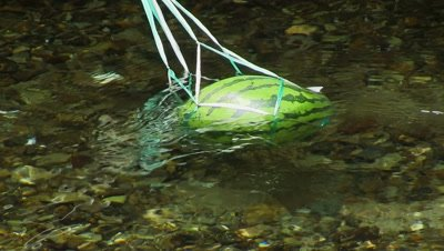 Watermelon held to cool down in a stream