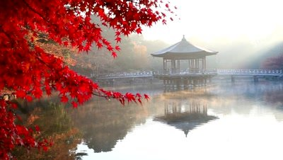 Red maple leaves at Ukimidou,Heron Pond