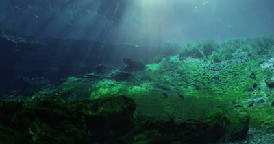 Sunlight filtering through the water as fish feed on algae growing at the bottom of Silver Springs