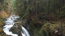 Footbridge Above Falls In Temperate Rainforest