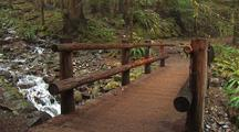 Footbridge Above Creek In Temperate Rainforest