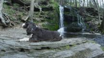 Dog lies At Top  of Waterfall, Montaque, Ma, Usa