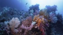 A Reef Full Of Soft Coral Grows On The Edge Of An Island Drop Off