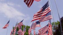 Group Of United States Flags Blowing In The Wind