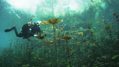 A Diver Crosses A Field Of Water Lillys Covering The Entrance To A Cenote
