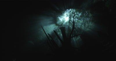 A diver explores a Cenote