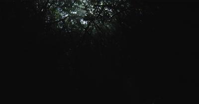 Mangrove roots Cenotes