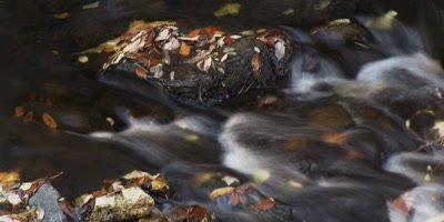 Time lapse, water flows over small rocks in a forest
