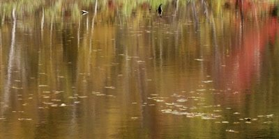 Fall Color reflexion on pond