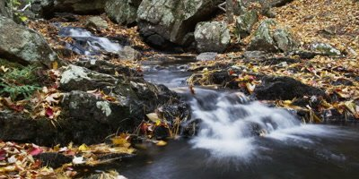 A flowing stream in Acadia National Park