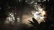 Misty Tropical Forest With Jesus Rays