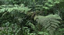 Butterflies Near Tree Ferns In Jungle