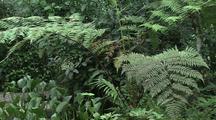 Butterflies Near Tree Ferns In Jungle