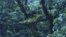Jungle During Rain