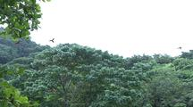 Macaws Flying From Tree