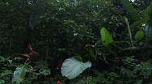 Jungle With Banana Leaves And Bird Of Paradise