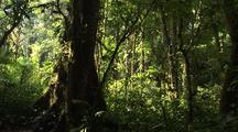 Jungle Understory Panorama