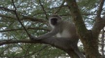 Edited Compilation, African Wildlife, Monkeys, Baboon, Ostrich, Storks