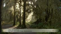 Edited Compilation Of Temperate Rainforest, Stream And Great Blue Heron