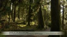 Edited Compilation Of Old Growth Forest Of Pacific Northwest