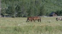 Edited Compilation Of Horses Grazing Below Peak Of Grand Teton Mountains