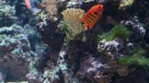 Edited Compilation Of Tropical Fish Of Hawaii