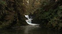 Waterfall Close-Up With Fern Lined Shore And Stream With Salmon Spawning