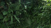 Butterflies Flying  Around Ferns, Tropical Plants