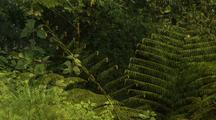 Ferns And Bamboo