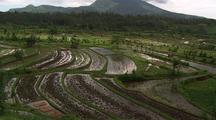 Wide Valley Shot Of Rice Paddies With Mountain Behind