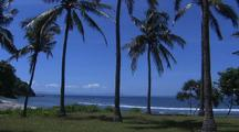 Indonesian Beach With Palm Trees