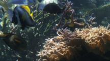 Various Reef Fish Swim Over Coral
