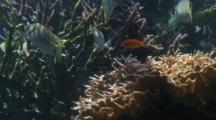Reef Fish And Coral