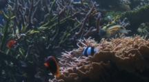 Damsel Fish And Other Reef Fish