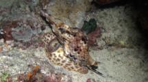 Cone Snail At Night