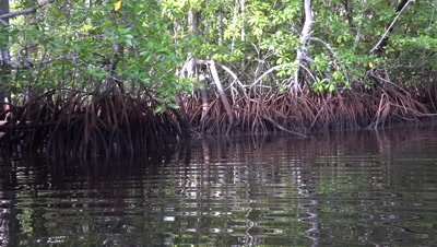 Pan through mangroves on kayak POV