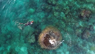 Snorkeler swimming around coral block on pristine reef in Raja Ampat as seen from above