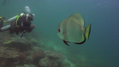 Relaxed diver watching single batfish