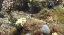 Network Pipefish On Reef