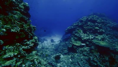 wide angle pan along coral reef landscape,coral pillars of hard corals,blue water,Red Sea
