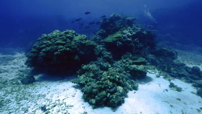 wide shot of coral reef landscape,scuba divers in background,sandy sea bed,Red Sea