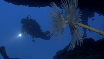 underwater shot of scuba diver exploring under water cave,sea worm aside
