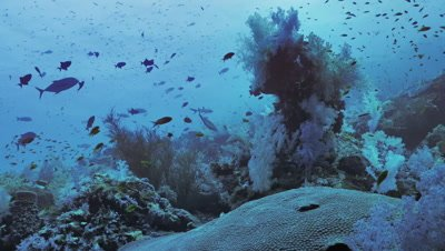 beautiful coral reef plateau in the Red Sea