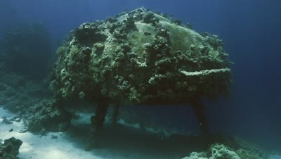 wide shot of conshelf 2, sea urchin, shab Rumi, Sudan, Red Sea