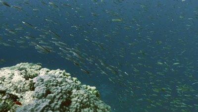 massive school of sardines over coral reef